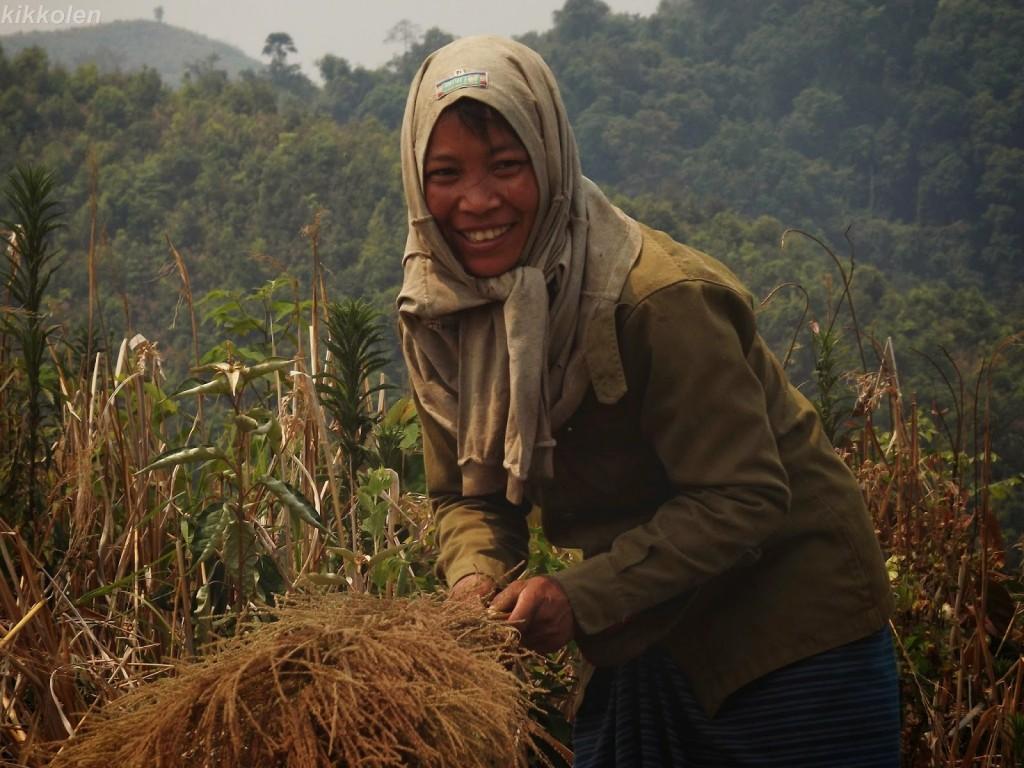 Una donna laotiana mentre secca l'erba che verrà usata per fare le caratteristiche scope thailandesi.