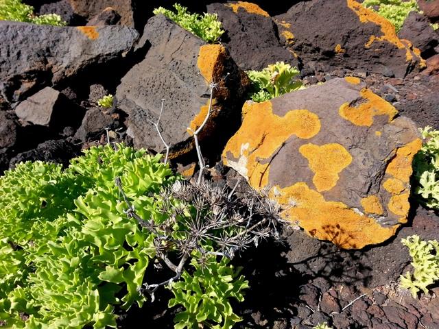 il fiore nella roccia, el hierro